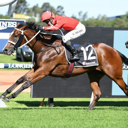 Horse Betting – Horse Raising Game, Trust Your Jockey